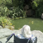 A resident in a wheelchair admiring koi carp in a pretty pond