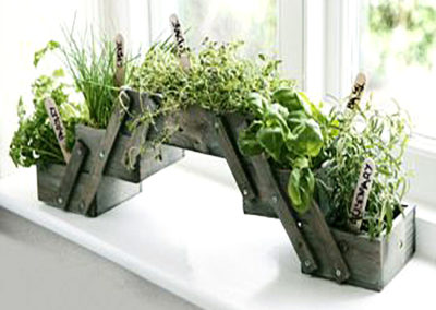 A planter kit showing healthy freshly grown herbs