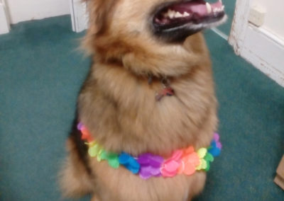 Dog dressed in an Hawaiian flower garland at Loose Valley Care Home