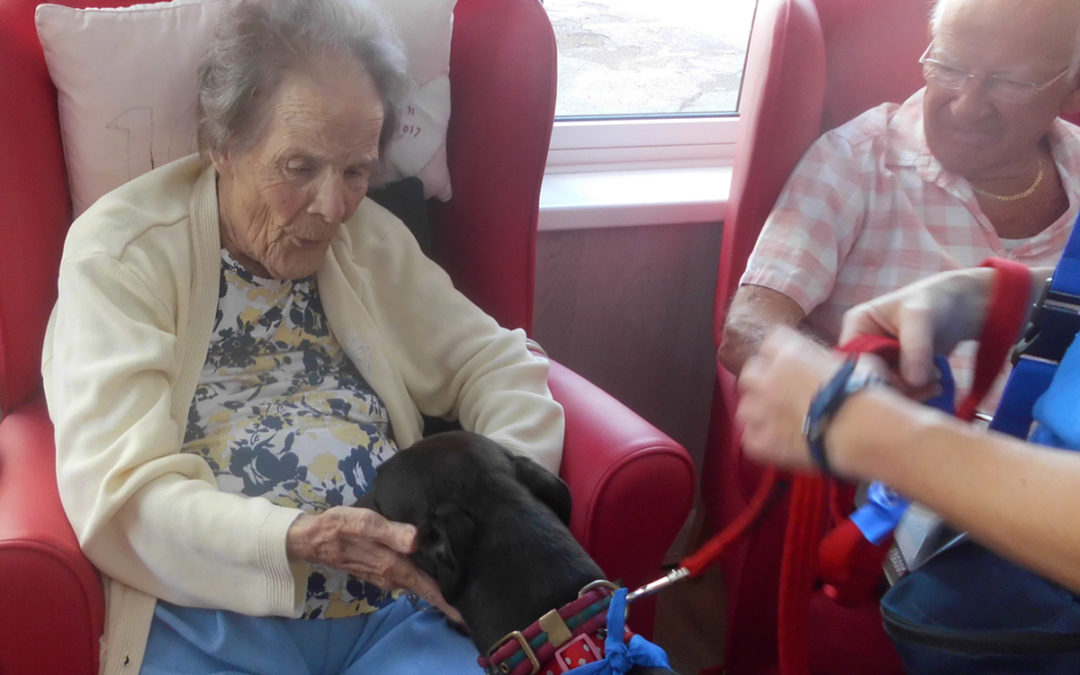 Pet Therapy with Trixie at Woodstock Residential Care Home