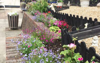 Meyer House Care Home garden with freshly planted flowers